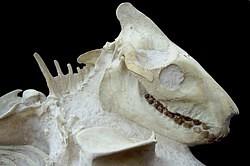 Fossilienpräparation